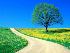 tree-field-flowers-dandelions-road