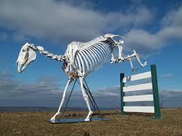 döglött ló